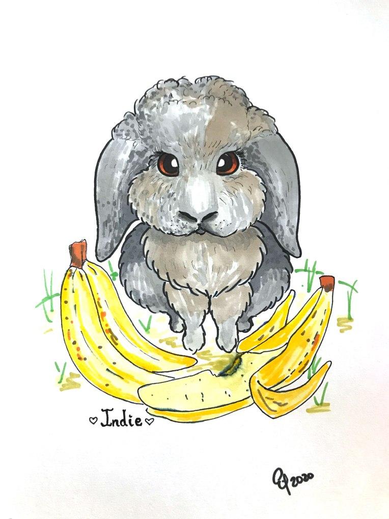 Gray-Bunny